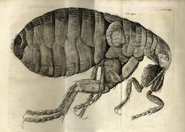 Micrographia restaurata : or, the copper-plates of Dr. Hooke's wonderful discoveries by the micro...
